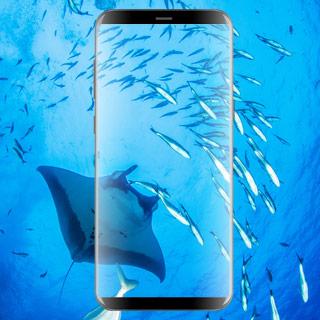 Galaxy S8 Gewinnspiel